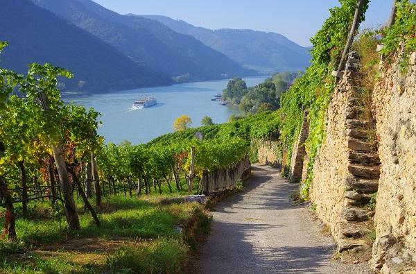 Wachau Weinberg - Wachau vineyard 15